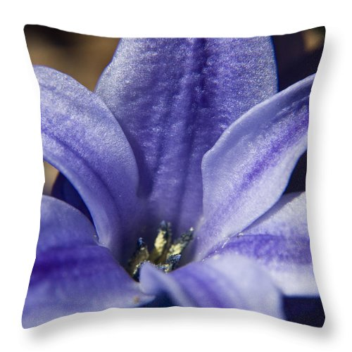Hyacinth Throw Pillow featuring the photograph Purple Hyacinth by Teresa Mucha