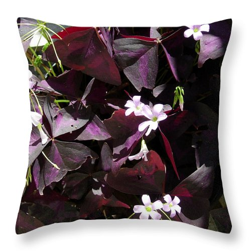 Flowers Throw Pillow featuring the photograph Purple Leaves With Tiny Pink Flowers by Stephanie H Johnson