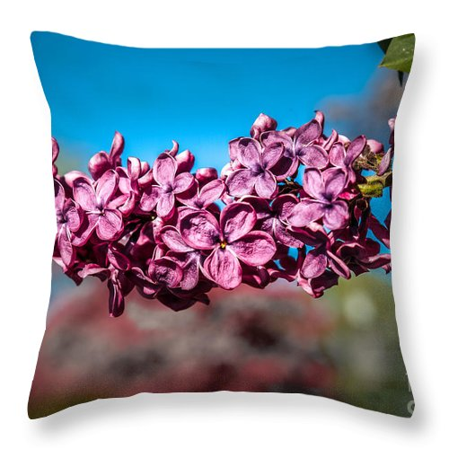 Lilac Throw Pillow featuring the photograph Purple Lilac by Robert Bales