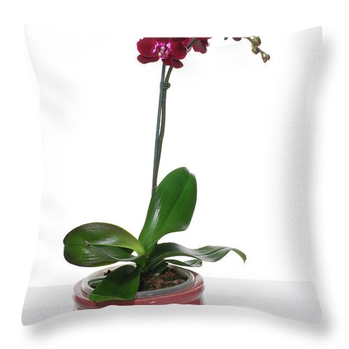 Pot Throw Pillow featuring the photograph Purple Orchid by Eran Turgeman