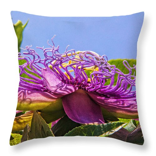 Hh Photography Of Florida Throw Pillow featuring the photograph Purple Passion Flower by HH Photography of Florida