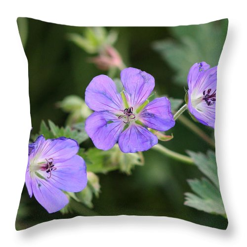 Flower Throw Pillow featuring the photograph Purple Pedals by JoJo Photography