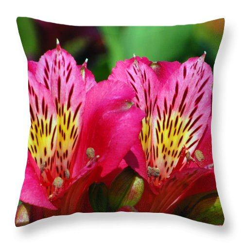 Peruvian Throw Pillow featuring the photograph Purple Peruvian Lily by Amy Fose