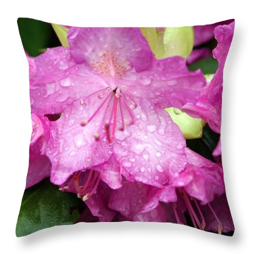 Flowers Throw Pillow featuring the photograph Purple Pink Horizontal by Marty Koch