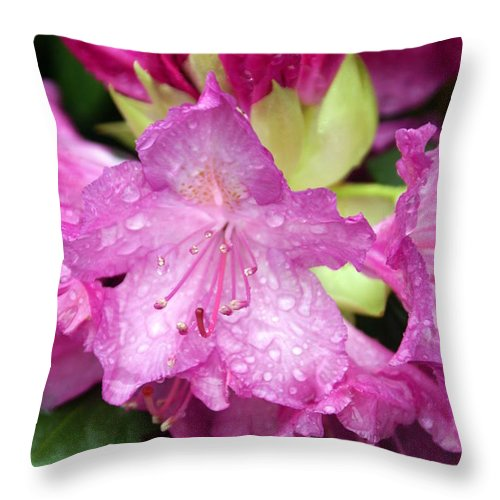 Fllowers Throw Pillow featuring the photograph Purple Pink by Marty Koch