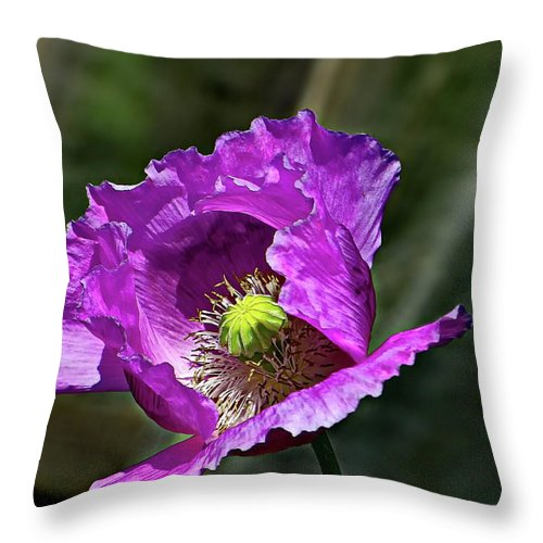 Poppy Throw Pillow featuring the photograph Purple Poppy by Lyuba Filatova