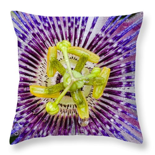 Passion Throw Pillow featuring the photograph Purple Radial by Christopher Holmes