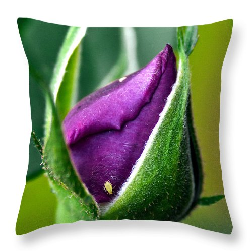 Rose Throw Pillow featuring the photograph Purple Rose Bud by Christopher Holmes