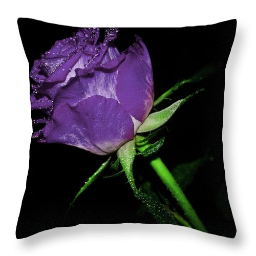Rose Throw Pillow featuring the photograph Purple Rose by Lee Pirie