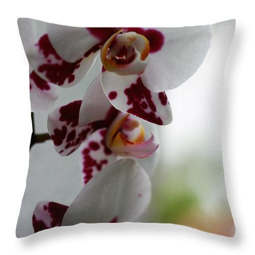 Orchid Throw Pillow featuring the photograph Purple Splash Orchid 1 by Kristina Jones