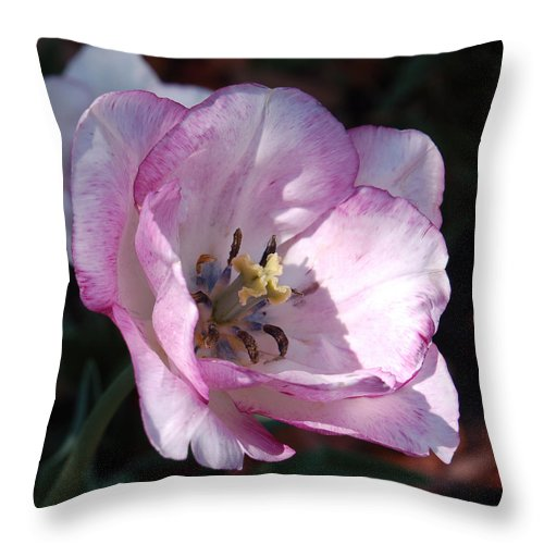 Purple Throw Pillow featuring the photograph Purple Tulip by Suzanne Gaff