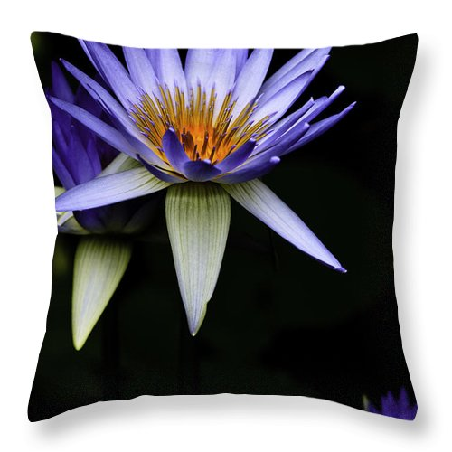 Purple Waterlily Water Lily Flower Flora Throw Pillow featuring the photograph Purple Waterlily by Sheila Smart Fine Art Photography