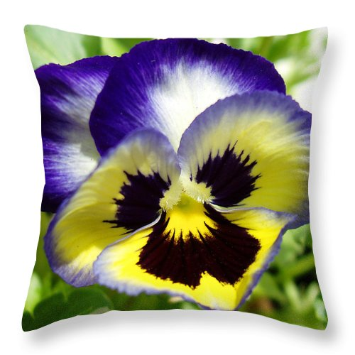 Pansy Throw Pillow featuring the photograph Purple White And Yellow Pansy by Nancy Mueller