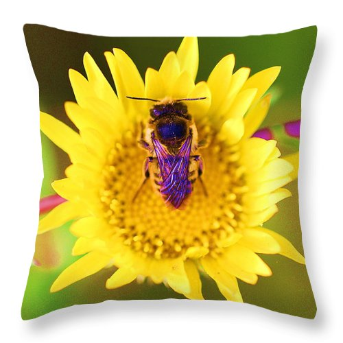 Bees With Purple Wings Throw Pillow featuring the photograph Purple Wings by John King