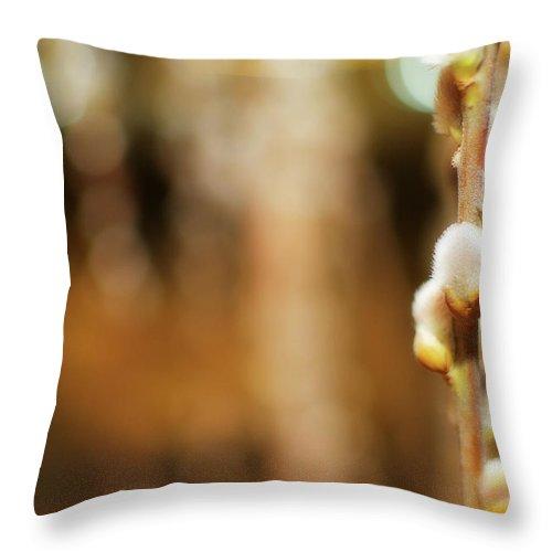Lisa Knechtel Throw Pillow featuring the photograph Pussy Willows by Lisa Knechtel