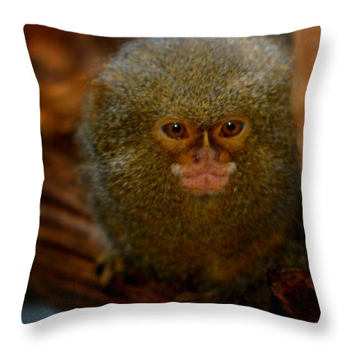 Pygmy Marmoset Throw Pillow featuring the photograph Pygmy Marmoset by Anthony Jones