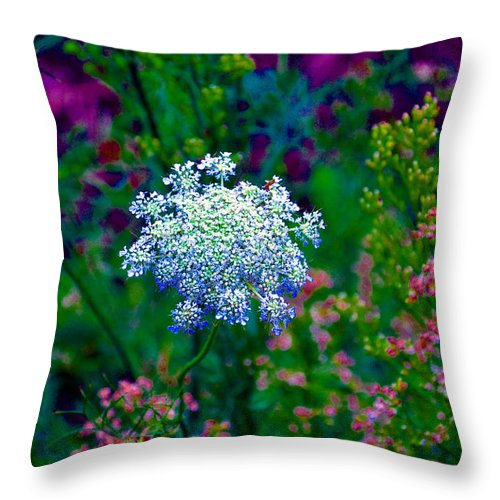 Queen Annes Lace Throw Pillow featuring the photograph Queen Anne by Brittany Horton