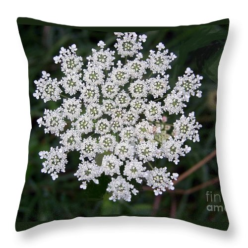 Flowers Throw Pillow featuring the photograph Queen Anne's Lace by Charles Robinson