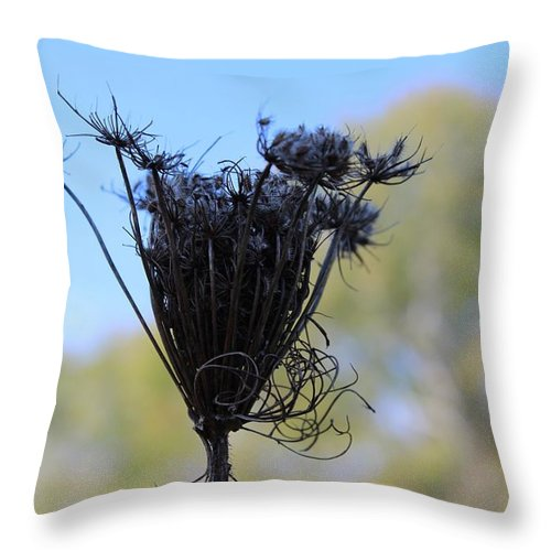 Flower Throw Pillow featuring the photograph Queen Annes Lace In Autumn by Modern Art