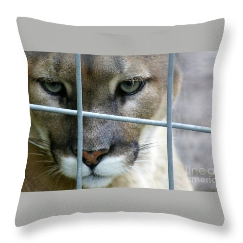 Caged Throw Pillow featuring the photograph Quiet Thoughts by Linda Shafer