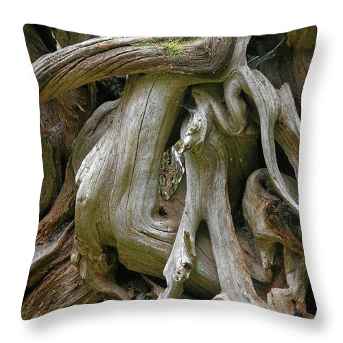 Roots Throw Pillow featuring the photograph Quinault Valley Olympic Peninsula Wa - Exposed Root Structure Of A Giant Tree by Christine Till