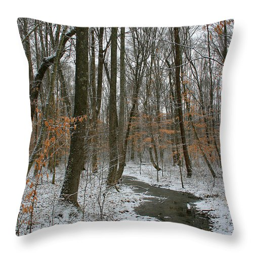 Forest Woods Water Winter Tree Snow Cold Season Nature Throw Pillow featuring the photograph Quite Path by Andrei Shliakhau