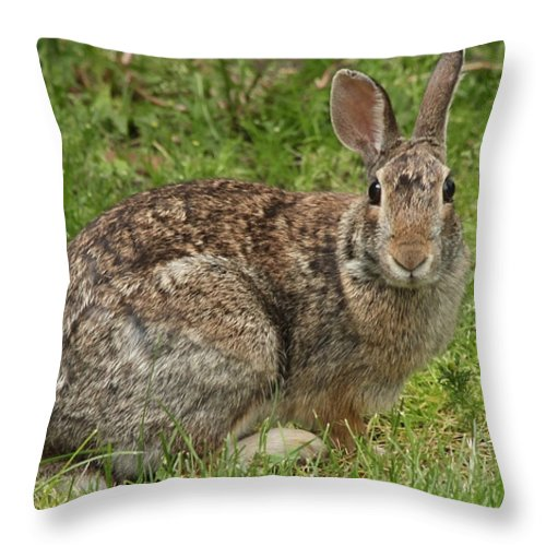 Wildlife Throw Pillow featuring the photograph Rabbit by Lori Tordsen