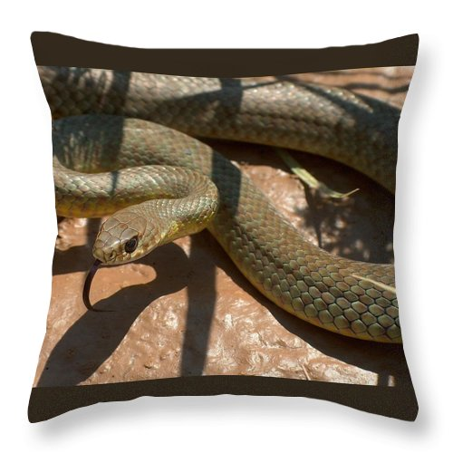 Green Racer Throw Pillow featuring the photograph Racer On The Rio Grande by Tim McCarthy