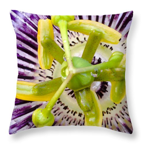 Passion Throw Pillow featuring the photograph Radial Arms by Christopher Holmes