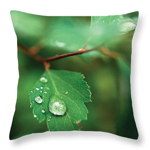 Rain Throw Pillow featuring the photograph Rain Droplet On Leaf by Steve Somerville