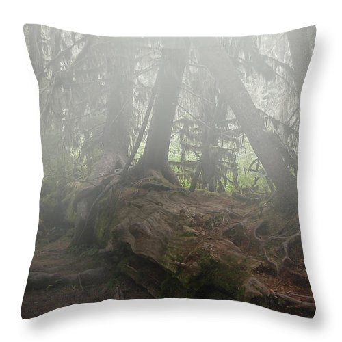 Rain Forest Throw Pillow featuring the photograph Rain Forest by Joseph G Holland