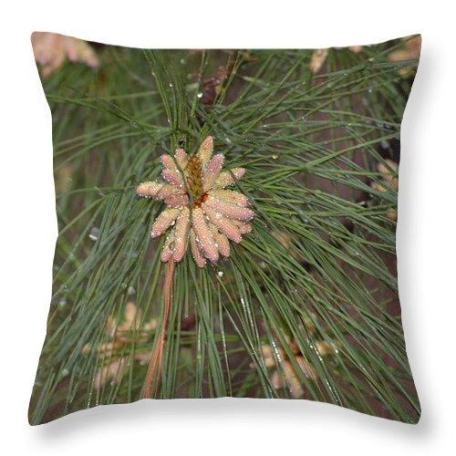 Rain Throw Pillow featuring the photograph Rain N Flower by Meg M