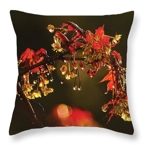Maple Leaves Throw Pillow featuring the photograph Rain Soaked Leaves-1 by Steve Somerville