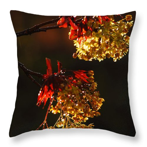 Spring Throw Pillow featuring the photograph Rain Soaked Leaves-2 by Steve Somerville
