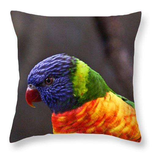 Bird Colorful Throw Pillow featuring the photograph Rainbow Lorikeet by Douglas Barnett
