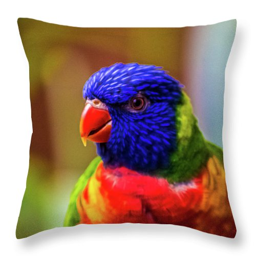 Rainbow Lorikeet Throw Pillow featuring the photograph Rainbow Lorikeet by Martin Newman