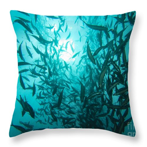 Coral Throw Pillow featuring the photograph Rainbow Runners At Pohnpei by Dan Norton