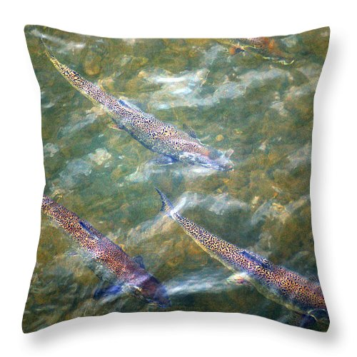 Rainbow Trout Throw Pillow featuring the photograph Rainbow Spawn by Linda McRae