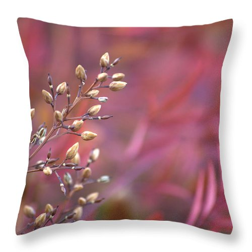 Red Throw Pillow featuring the photograph Rainbows From Seeds by Mark Bell