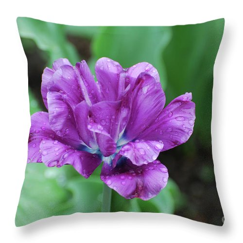 Tulip Throw Pillow featuring the photograph Raindrops Clinging To The Purple Petals Of A Tulip by DejaVu Designs