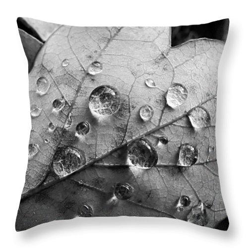 Drops Throw Pillow featuring the photograph Raindrops by Daniel Csoka