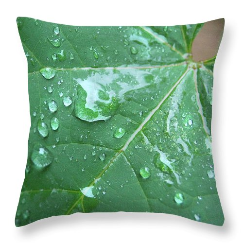 Rain Throw Pillow featuring the photograph Raindrops by Jacqueline Dickens