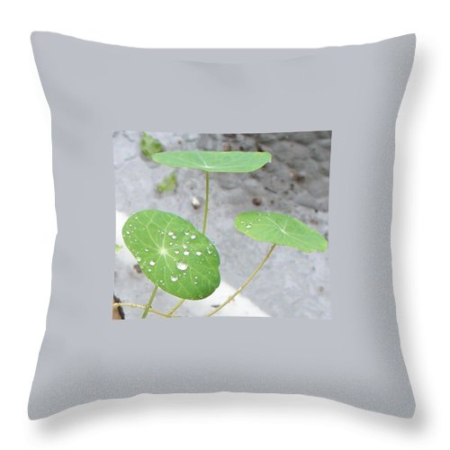 Floral Throw Pillow featuring the painting Raindrops On A Nasturtium Leaf by Eric Schiabor