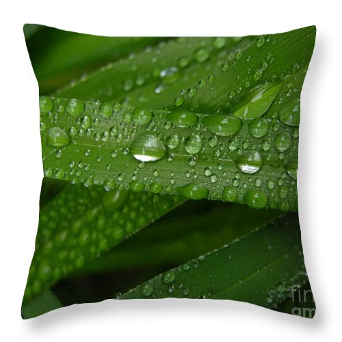 Rain Throw Pillow featuring the photograph Raindrops On Green Leaves by Carol Groenen