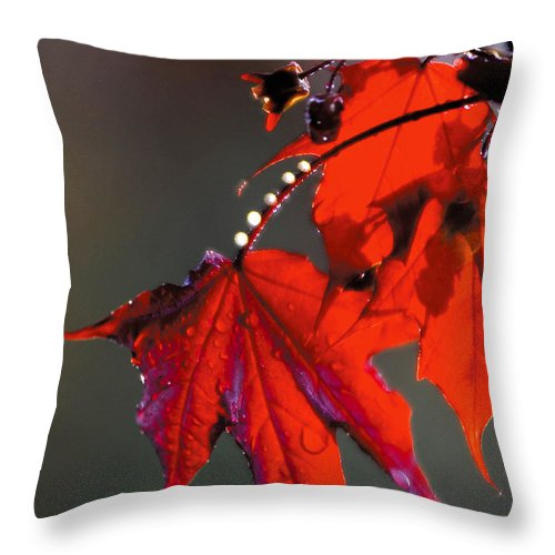 Red Leaves Throw Pillow featuring the photograph Raindrops On Red Leaves by Steve Somerville