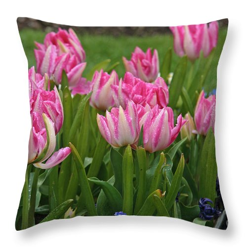 Pink Throw Pillow featuring the photograph Raindrops On Tulips by Carole Lloyd