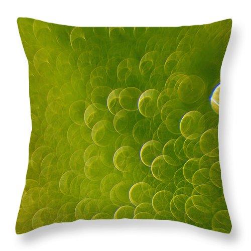 Rain Throw Pillow featuring the photograph Raindrops by Silke Magino