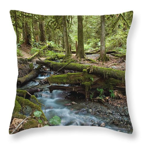 Stream Throw Pillow featuring the photograph Rainforest At Bridal Veil Falls - British Columbia by Linda McRae