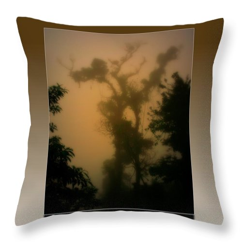 Tree Throw Pillow featuring the photograph Rainforest Mist by Perry Webster