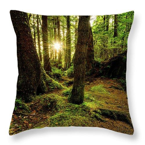 Rainforest Throw Pillow featuring the photograph Rainforest Path by Chad Dutson